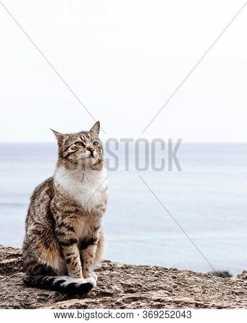Cute Funny Cat Is Sitting On The Beach Against The Sea And The Horizon. Selective Focus.