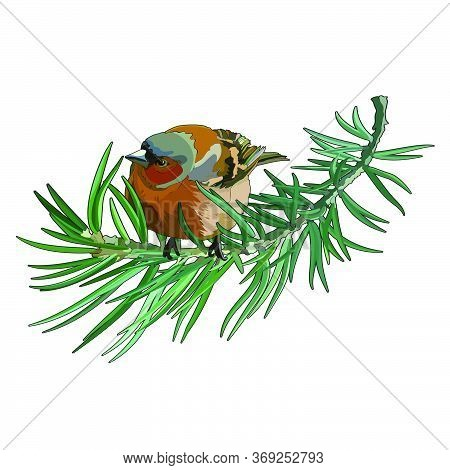 Card With Bullfinch On The Fir Tree. Postcard For New Year And Christmas. Vector Illustration, Eps 1