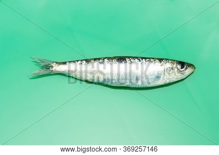 Sardine Is A Healthy Fish
