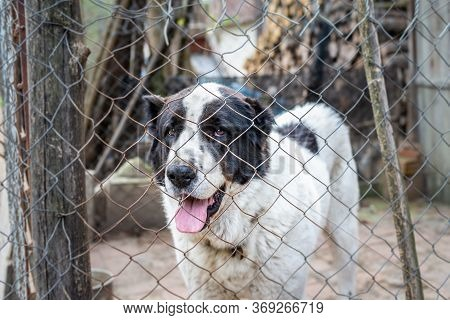 Sad Dog In Cage Locked. Locked Sad Dog In Cage. Close Up Of Sad Dog. Stray Dog Animal. Sad Dog Portr