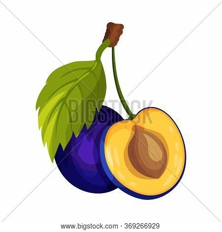 Halved Plum Berry With Sweet Flesh And Stone Vector Illustration
