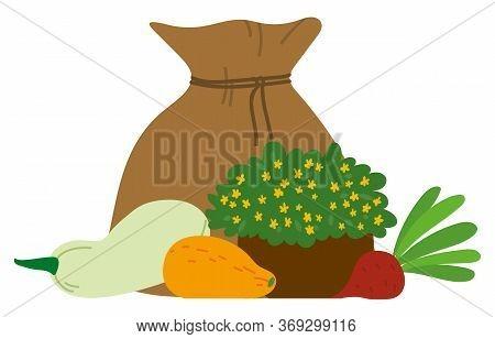 Burlap Bag, Sack With Seasonal Vegetables. Big Crop On Farm. Zucchini, Parsley, Turnip, Beet. Autumn