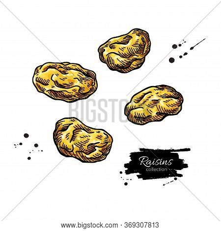 Raisins Vector Drawing. Dried Grape Objects. Hand Drawn Dehydrated Fruit Illustration