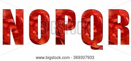 Flower Font Alphabet N, O, P, Q, R, Of Real Live Flowers, Red Roses. White Isolated Background. Coll