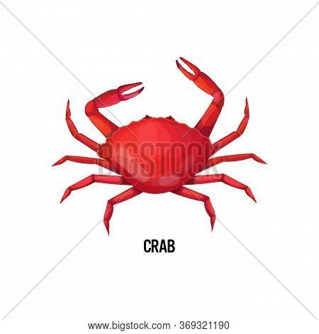 Fresh Crab Isolated On White Background Seafood Concept Vector Illustration