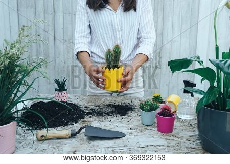 Woman's Hands Hold Transplanted Cactus Into A New Yellow Pot On The Wooden Table. The Process Of Tra