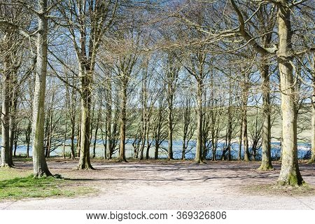 Friston Forest Near Seaford, East Sussex, England, View Of The Trees In Spring, River Cuckmere On Th
