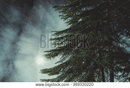 Mysterious Dark Forest With Night Time Fog. Spruce Tree In Front And Strange Light From Background