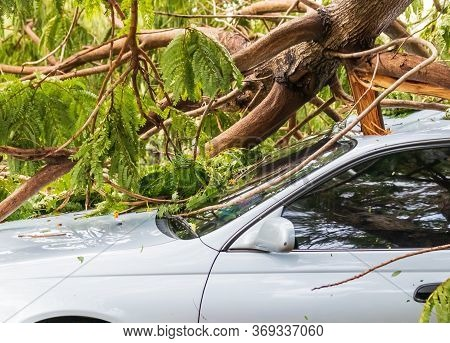 Car Hit By A Tree Fell On It. Due To Rain And Storms Causing Trees To Fall