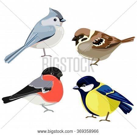 Birds Set Vector Illustration. European Crested Tit, Titmouse, Bullfinch, Sparrow.