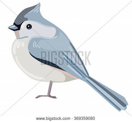 European Crested Tit Bird Vector Illustration. Beautiful Bird
