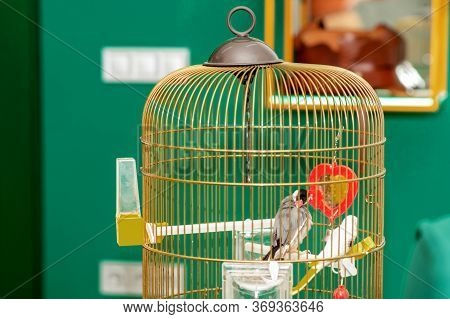 Couple Of Beautiful Parrot At Home Cage. Stay Home And Quarantine Concept.