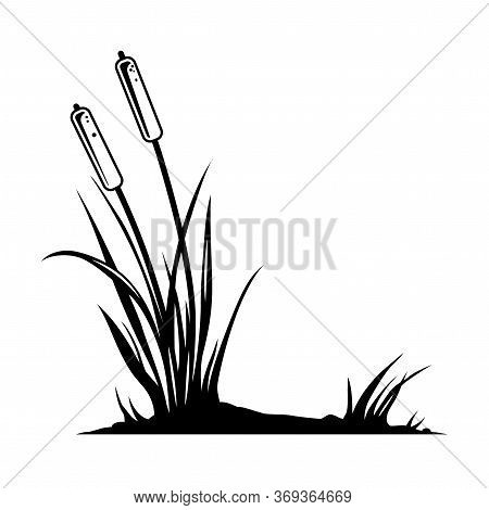 Reed Plant Vintage Template In Monochrome Style Isolated Vector Illustration