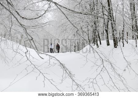 NEBRODI PARK, SICILY, ITALY - GENUARY 26, 2019: couple of people walking on snow path of frozen forest in Nebrodi Mountains of Sicily tourism outdoor activity