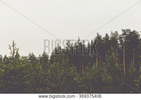 The Tops Of The Trees In The Pine Forest Against The Gray Sky. Preparation For Design With The Place