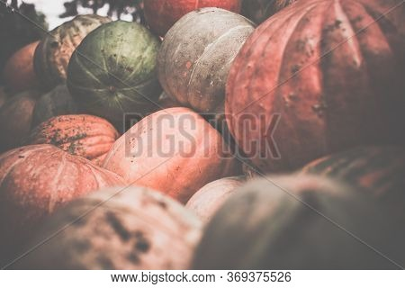 Heap Of Dirty Pumpkins. Toned, Style Photo.