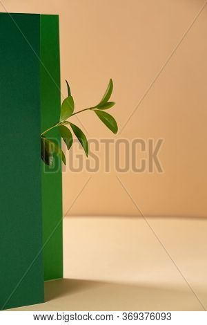 Asymmetric, Abstract Geometric Background With A Plant