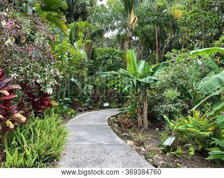 The Sidewalk Through A Garden At A Botanical Garden In Florida.