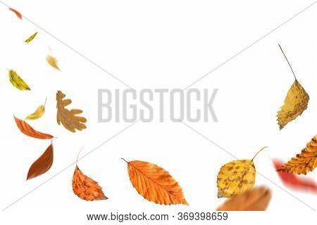 Falling Autumn Foliage Isolated On White. Autumn Leaves Falling To The Ground. Autumn Leaves Falling