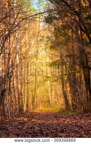 Scenery Colorful Park With Sunny Beams. Autumn Forest With Dirty Road
