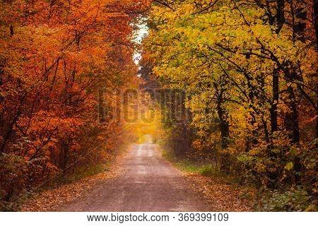 Amazing Natural Autumn Background. Summer Meets Autumn