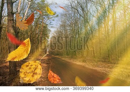Colorful Autumn Leaves In Freefall. Autumnal Mood Background.