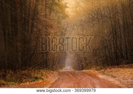 Autumn Forest With Rays Of Warm Light. Footpath In Scene Autumn Forest