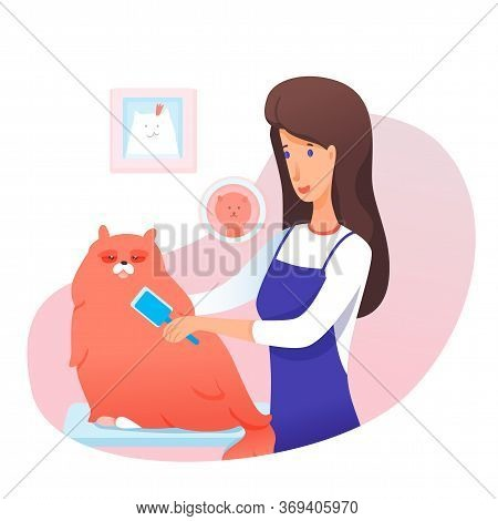 Female Groomer Comb Out Big Fluffy Cat Cartoon. Woman In Apron Taking Care Of Pet. Preparation For S