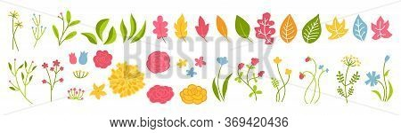 Branch And Flower Rose Botanical Green Set. Abstract Different Beautiful Floral Design Elements. Col