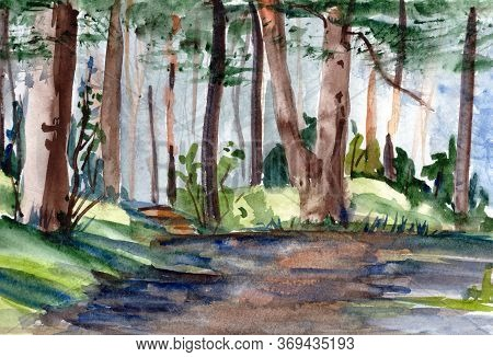 Watercolor Drawing A Travel Sketch Pine Forest Permeated By Sunlight