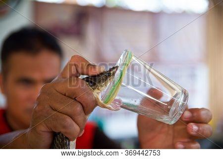 Man Takes Poison, King Cobra Trainer, Animal Of Prey, Snake Against Man, Snake Venom For Medicine, D