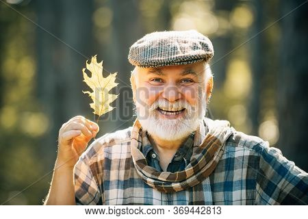 Senior Man On A Walk In A Forest In An Autumn Nature Holding Leaves. Smiling Senior Man Holding Yell