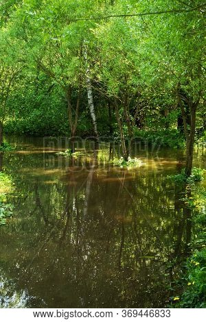 Flooded Trees In The Forest. The River Overflowed Its Banks After The Rain And Flooded The Trees.