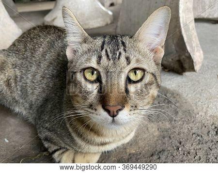 Close Up Cute Cat On Cement Floor
