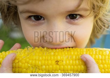 Close-up Portrait Of Cute Little Child Eating Yellow Sweet Corncob Corn. Farming And Autumn Crops Co