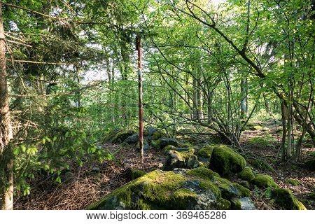 Wild Forest In Sumava National Park In Czech Republic