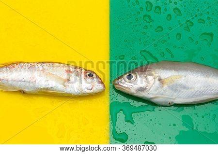 Fresh Fish Fresh From The Sea