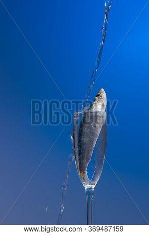 Sardine Is A Healthy Fish