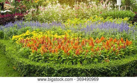 A Garden Of Orange Wool Flower, Blue Salvia, Yellow Sunflower, Red Pink And White Hollyhock And Gree