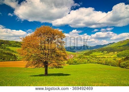 Spring Rural Landscape With A Lonely Tree On A Grassy Meadow In A Foreground. National Nature Reserv
