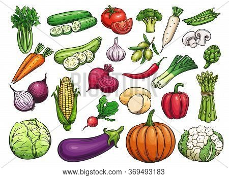 Hand Drawn Vector Vegetables Icons Set. Illustration Of Color Vegetables For Design Farm Product, Ma