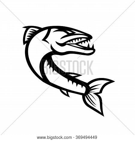 Mascot Icon Illustration Of An Angry Great Barracuda, A Saltwater Fish That Is Snake Like With Fears