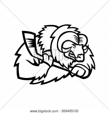 Mascot Icon Illustration Of Head Of A Muskox, Musk Ox Or Musk-ox, An Arctic Hoofed Mammal Of The Fam