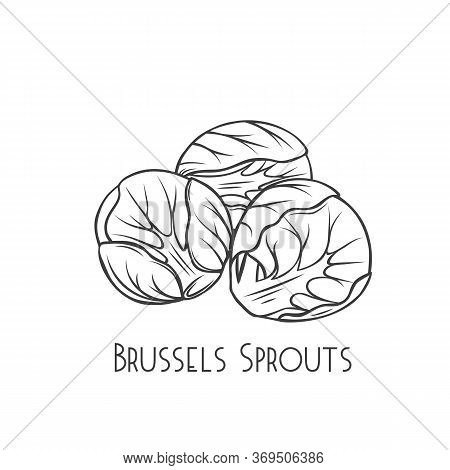 Brussels Sprouts Outline Vector. Green Vegetables In Cartoon Style. Illustration Of A Pile Of Brusse