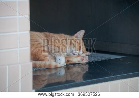Orange Golden Tiger Stripped Pattern Fur Feline Cat Sleep On House Floor In The Afternoon