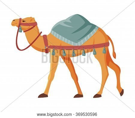 Camel With Saddle, Two Humped Ddesert Animal, Symbol Of Egypt Flat Style Vector Illustration On Whit