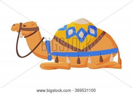 Lying Camel With Saddle, Ttwo Humped Ddesert Animal, Symbol Of Egypt Flat Style Vector Illustration