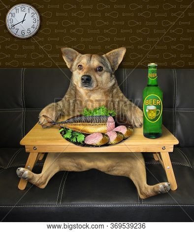 The Beige Dog Is Drinking Beer And Eating Stuffed Fish From A White Square Plate At A Wooden Bed Tra
