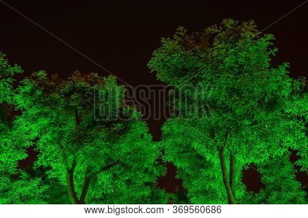 Xian, China - May 1, 2010: Black Night Scene. Lights From Bottom Color Foliage Of Trees Green.