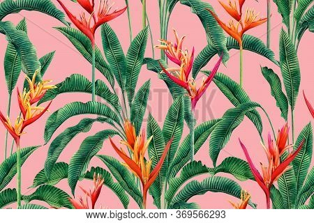 Watercolor Painting Bird Of Paradise Blooming Flowers,colorful Seamless Pattern Pink Background.wate